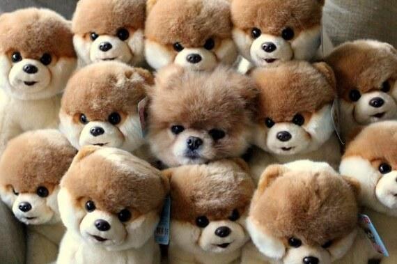 04-20-dogs-hide-seek