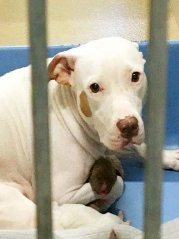 04-dog-puppies-shelter-orange-county
