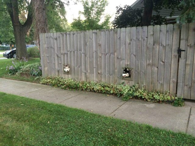 04-fence-window-for-dogs