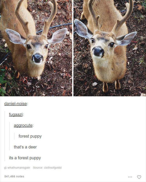 04-funny-animal