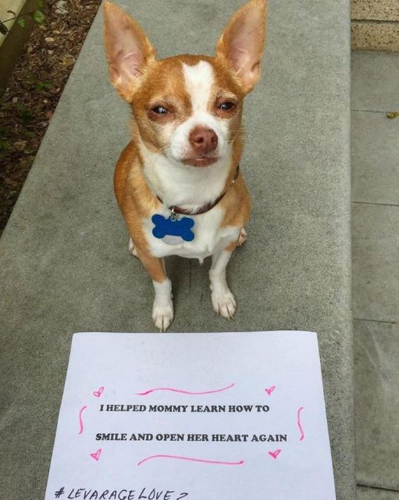 04-rescue-dogs-wear-signs-that-prove-they-werent-the-only-on