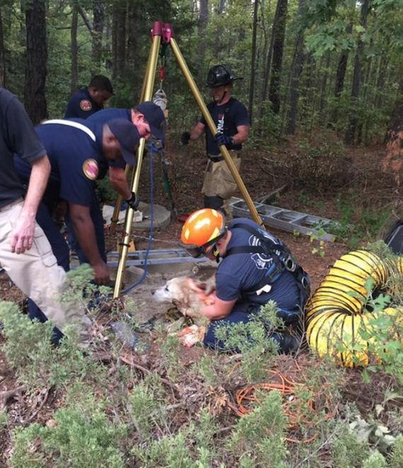 Elderly Blind Dog Plummets Into 40-Foot Well, Then Rescuers Find A Way To Save Him