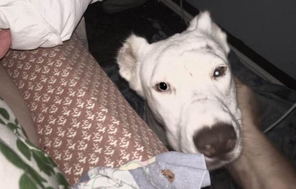 05-shelter-dog-niya-thanks