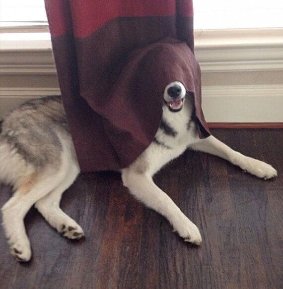 06-20-dogs-hide-seek