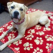 Truman is an Adorable Dog with a Big Heart in Need of a Special Loving Home