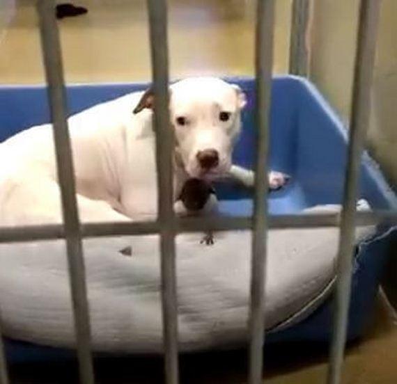 06-dog-puppies-shelter-orange-county