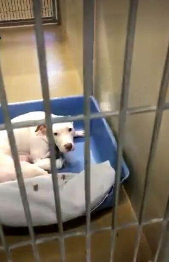 07-dog-puppies-shelter-orange-county