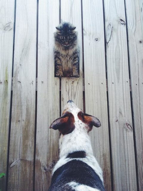 07-fence-window-for-dogs
