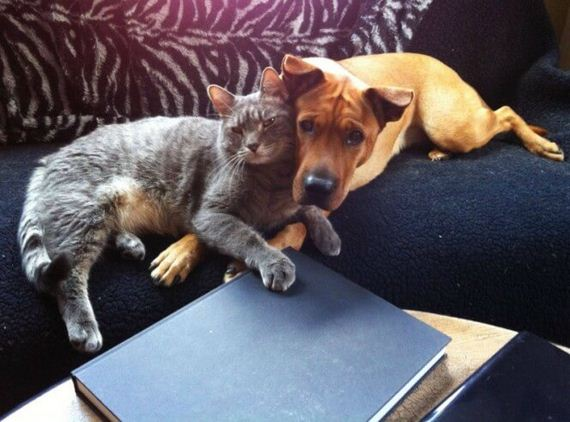 For 5 Minutes They Left Their Dog And Cat Alone. This Is What They Found When They Returned