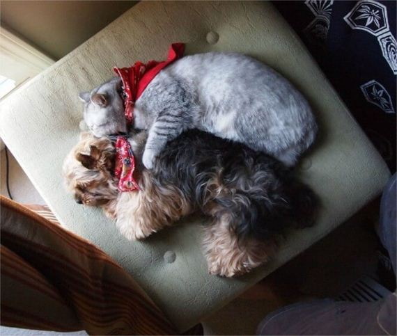 08-like-cats-and-dogs