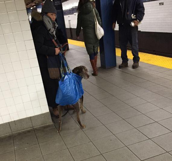 09-screen-dogs
