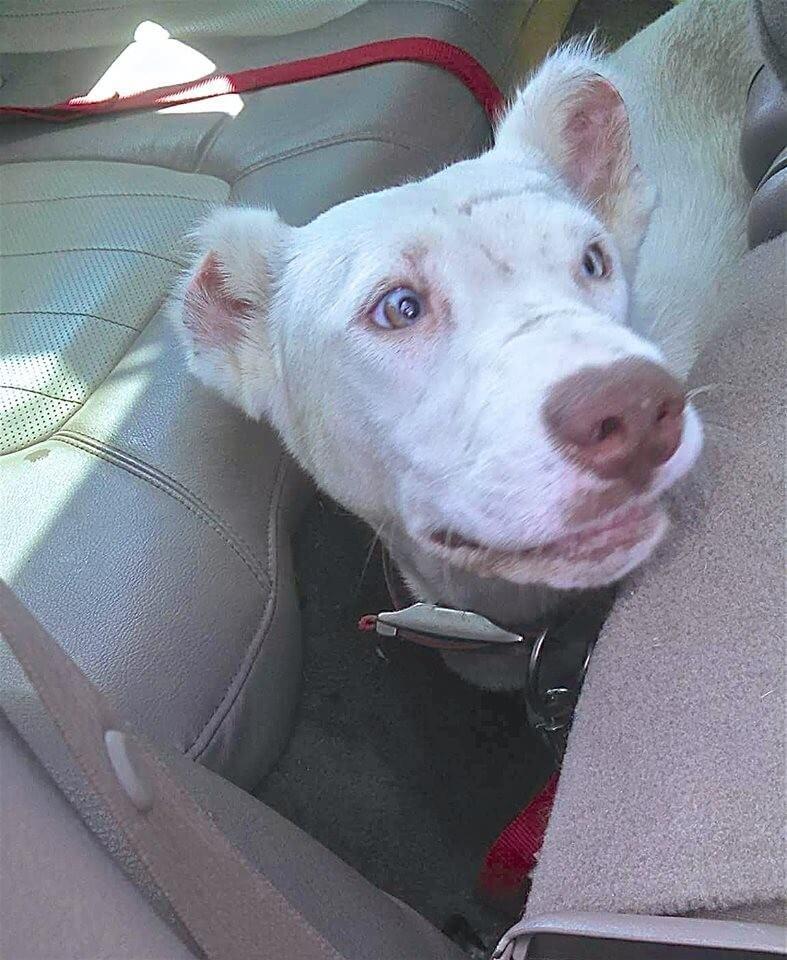 09-shelter-dog-niya-thanks