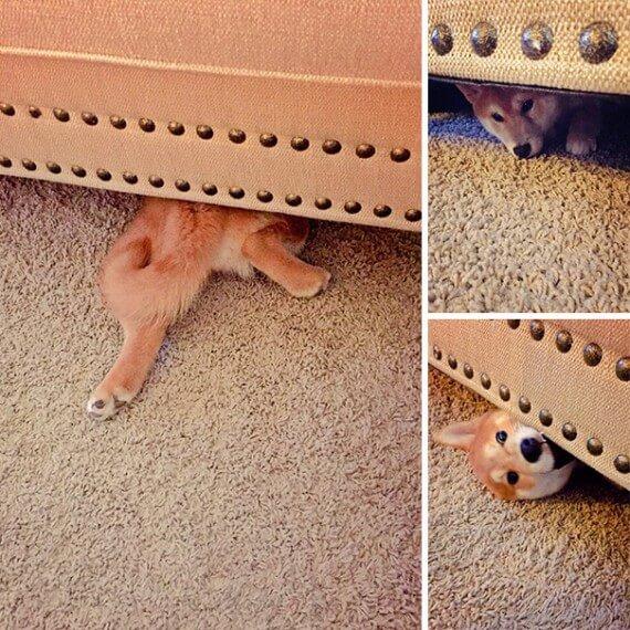 10-20-dogs-hide-seek