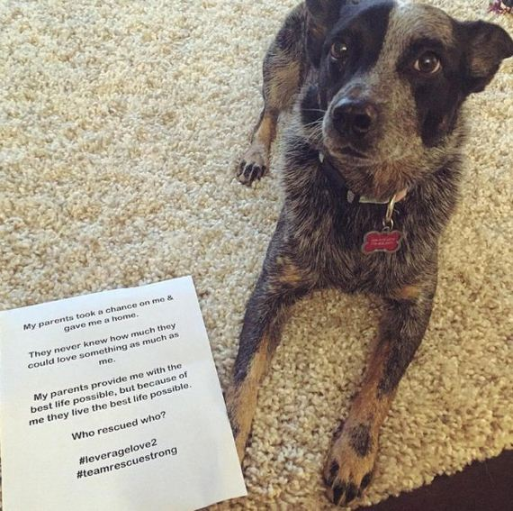 10-rescue-dogs-wear-signs-that-prove-they-werent-the-only-on