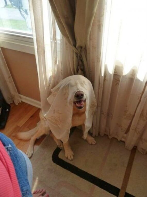 11-20-dogs-hide-seek