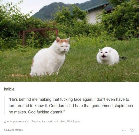 11-funny-animal