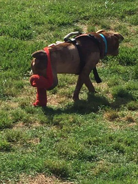 11-rambo-dog