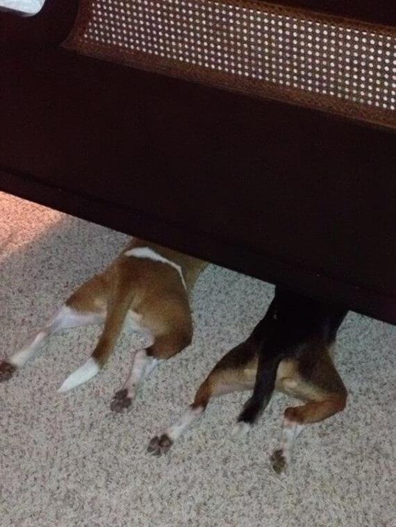12-20-dogs-hide-seek