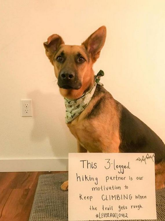 12-rescue-dogs-wear-signs-that-prove-they-werent-the-only-on