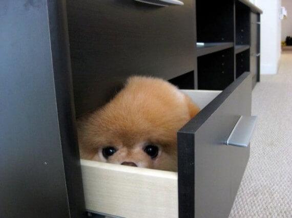 13-20-dogs-hide-seek