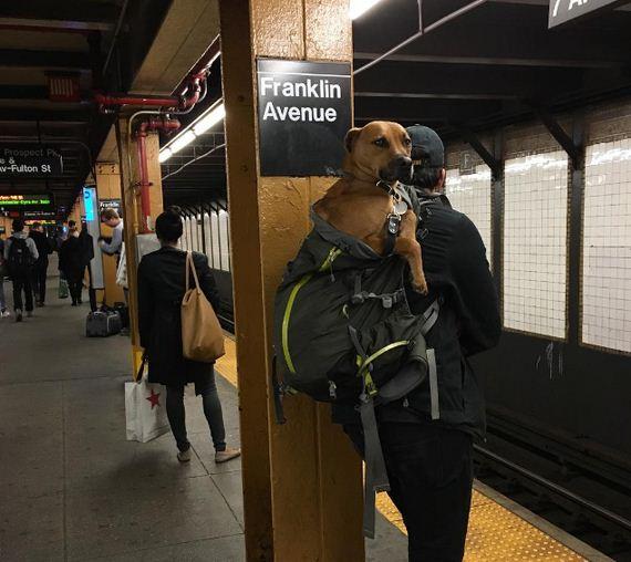 13-screen-dogs