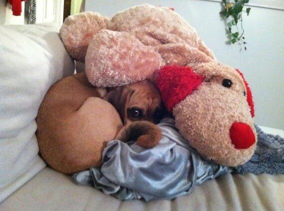 15-20-dogs-hide-seek