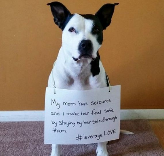 15-rescue-dogs-wear-signs-that-prove-they-werent-the-only-on