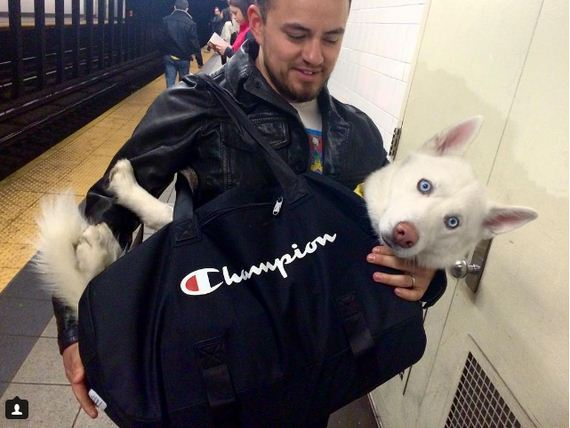 NYC Subway Banned Dogs Unless They Fit In A Bag, So These 15 Owners Got Creative.