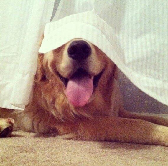 17-20-dogs-hide-seek
