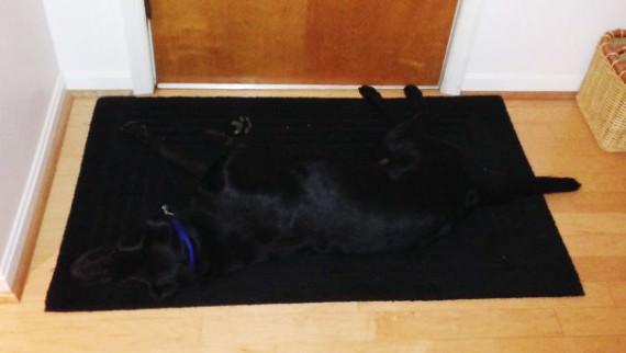 18-20-dogs-hide-seek