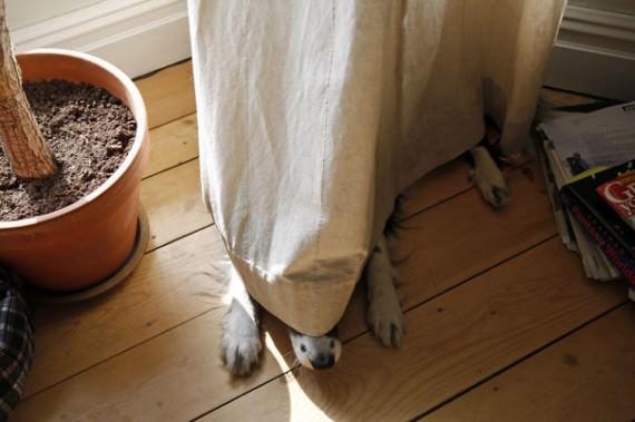 20-20-dogs-hide-seek