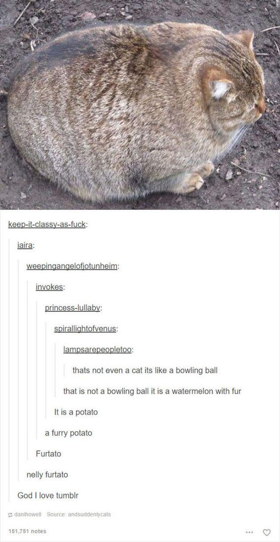 20-funny-animal
