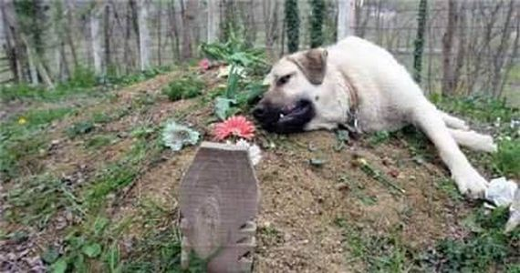 Family Dog Goes To Visit His Owner's Grave, But What He Does There Brings Everyone To Tears
