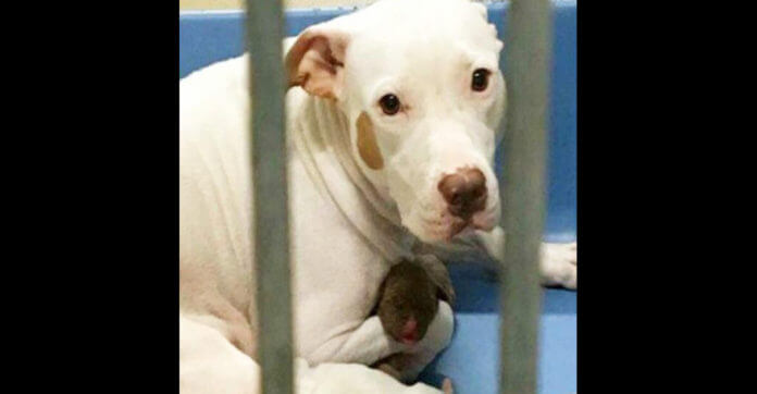 Scared Mother Dog Clings To Her Babies At The Shelter