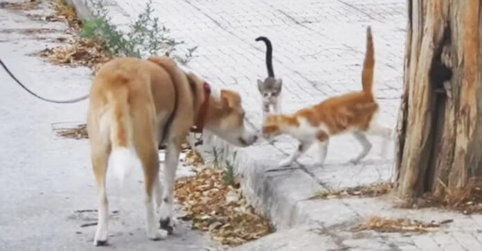 Rescue Dog Who Knows The Life Of A Stray Helps Feed 30 Stray Cats On Her Daily Walks