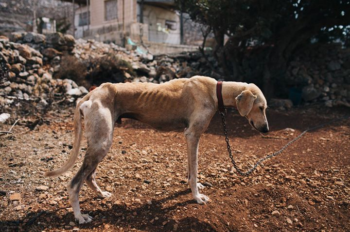 He Found This Dog Starving And Close To Death, But Look At Him Now!