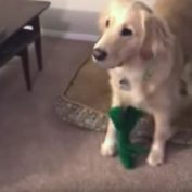 Human Dresses Up As Life-Size Version of Dog's Favorite Toy