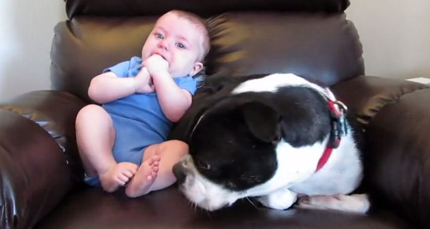 The Dog's Reaction To The Baby Pooping Himself Is Too Funny For Words