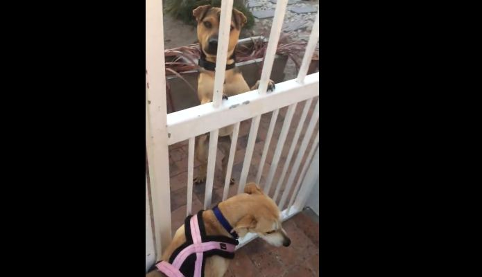 This Dog Won't Leave Without Her Best Friend – Hilarious!