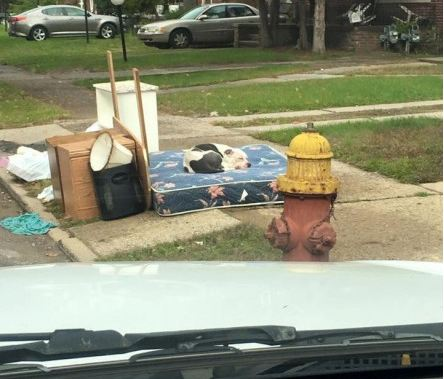 Dog Dumped at Curbside After Family Moves Needs a Loving Forever Family