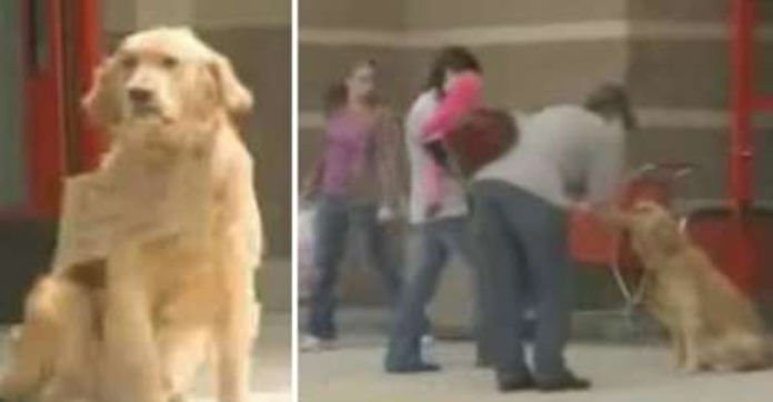 Shoppers Spot Dog Alone Outside Target, Then See Sign Around His Neck That Reads 'Waiting'