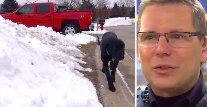 Cop's Confused By Dog Walking Alone, Then Sees A Frozen Woman In Pajamas Slumped Over On Porch
