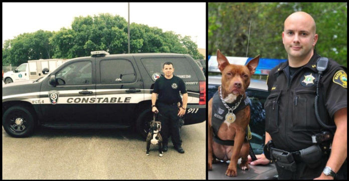 Local Cops Needed K9s, So They Went To The Animal Shelter And Adopted Pit Bulls