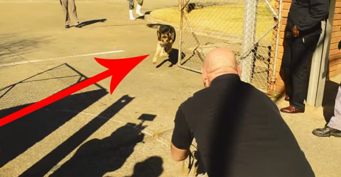 This Military Dog Hasn't Seen His Soldier In 2 Years. When They Let Go Of His Leash, Watch!