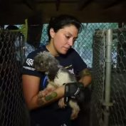 Police Search Stranger's Property After An Anonymous Complaint, Discover 130 Animals In Cages