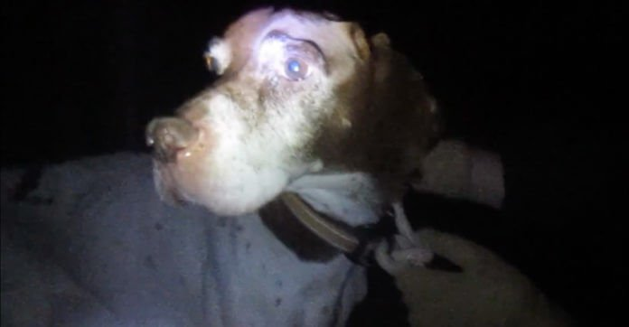 Found At Night, This Dog Was Tied To A Tree So He Couldn't Follow His Owner