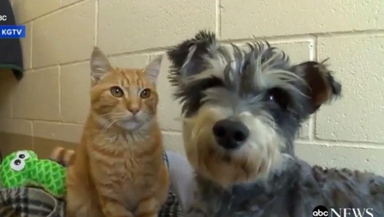 romeo-and-juliet-cat-dog-3