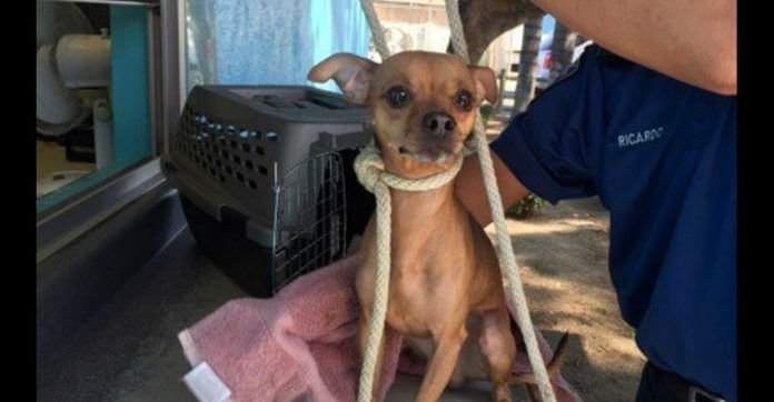 Heartbroken Dog Surrendered To A High-Kill Shelter Has Collar Replaced With A Rope