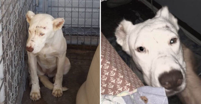 Scared Dog Wakes Up Rescuer In Middle Of Night To Thank Her