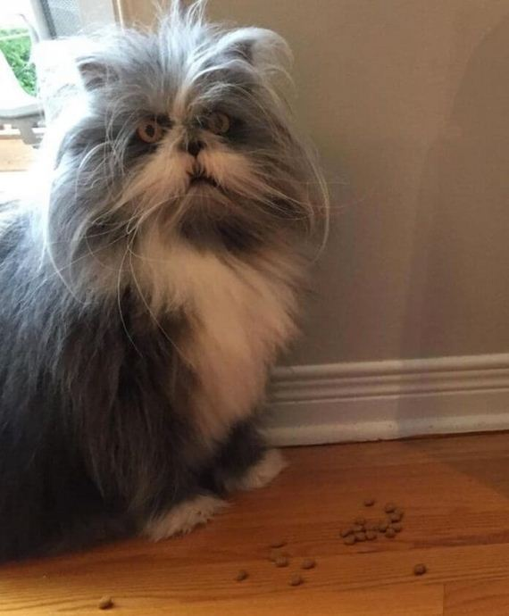 No One On The Internet Can Tell Whether This Animal Is A Cat Or A Dog